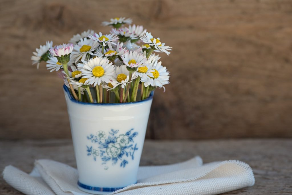 picked daisies in a small pot